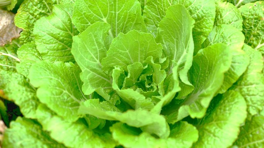 ・野菜ソムリエの女将が自ら厳選した食材を使用