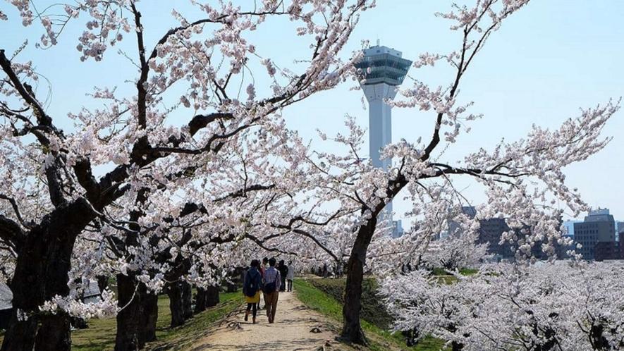 「春の五稜郭」