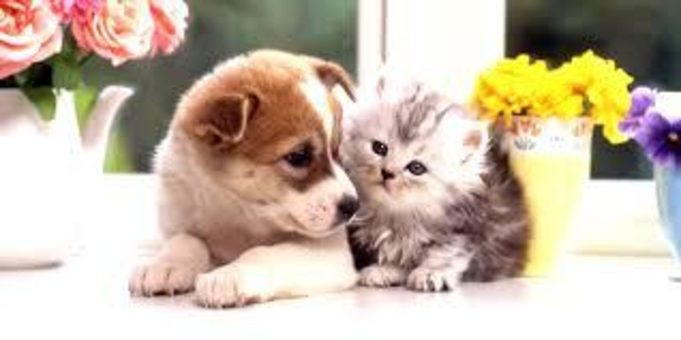 ■【大好きな家族とともに】愛犬・愛猫と過ごすペットフレンドリープラン【素泊り】■