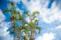 沖縄の風景を楽しみながら普段のストレスなどを忘れて、リラックスして一息つきましょう。