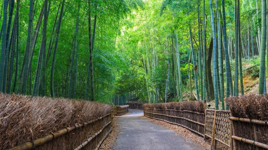 【嵐山】竹林の小道/壮大な竹林の風景が楽しめる人気のスポット