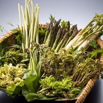 山の恵み山菜、香り豊かな採れたてを!