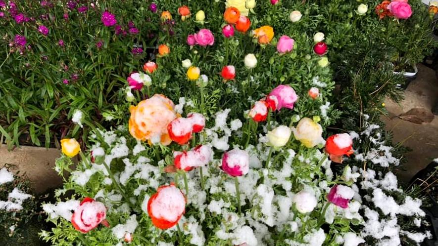 冬・庭の花_庭では四季折々の植物が楽しめます