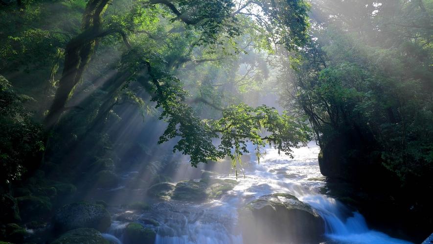 【観光】避暑地、紅葉の名所として知られる菊池渓谷まで、車で約15分