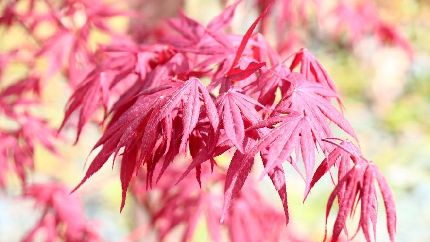 庭では四季折々の植物が楽しめます
