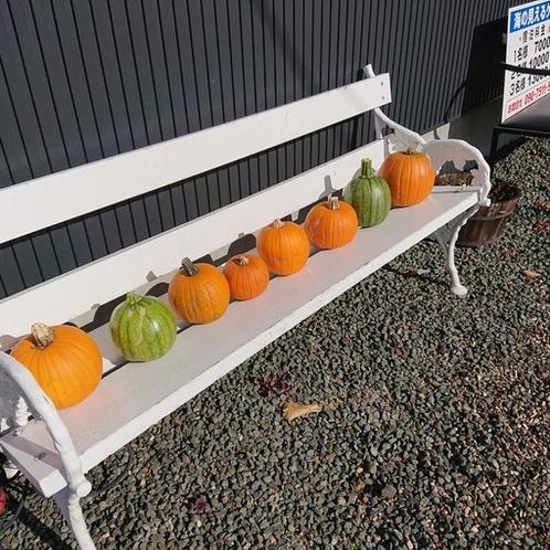 収穫したハロウィーンのカボチャを並べてみました