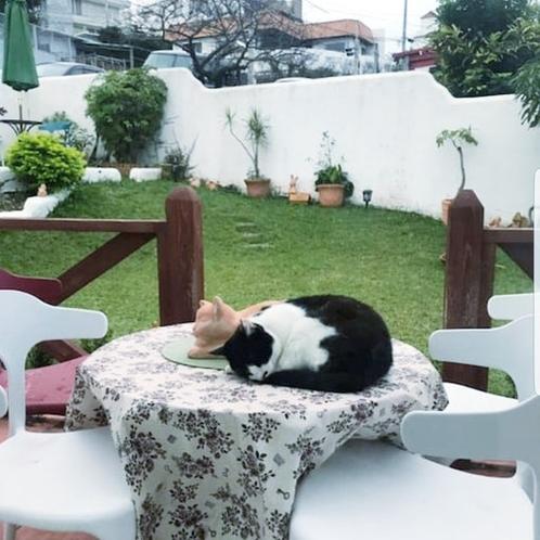 テラスで猫の置き場と寝る猫