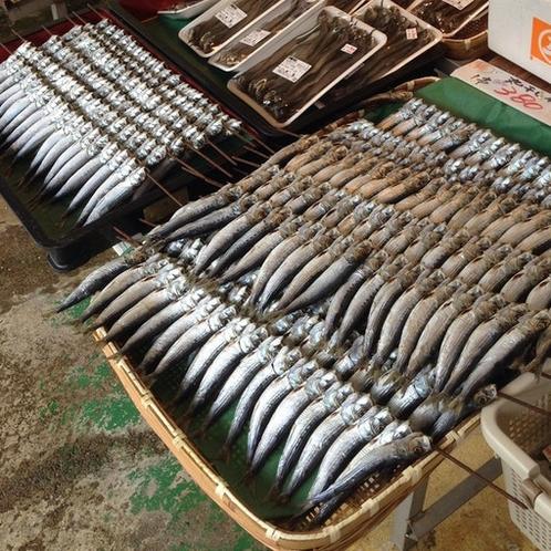 能生の魚 Fish from Nou