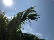宮古島の太陽をたっぷり浴びて育った植物たち