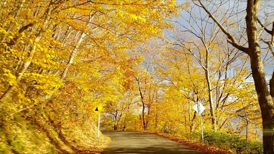 秋の湖畔沿い(1)