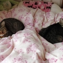 彩菜家で暮らす猫たち。左が「てん」右が「りん」です。両方シャイで人見知りな女の子。知らない人がいると