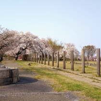 伯耆国分寺跡に隣接する法華寺畑遺跡。国分尼寺の跡とされるこの場所は、桜の季節ライトアップされます。