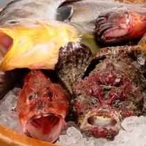 見島沖根つき魚