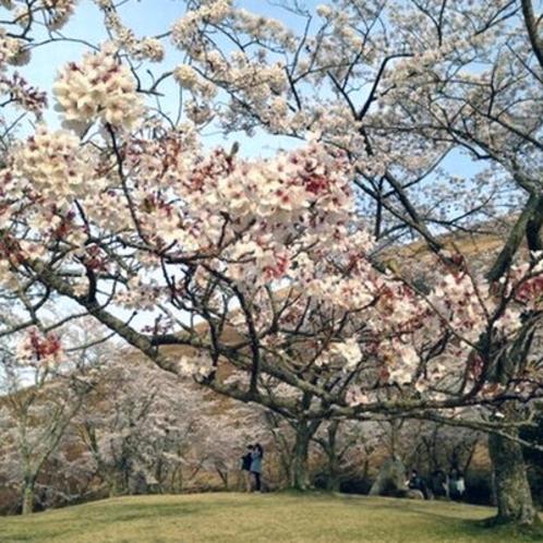 [大室山の桜の里]