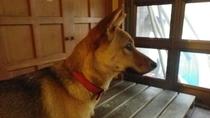 *看板犬ゆき 館内で「ゆき」という名の犬を飼っています。人懐っこくて吠えないのでご安心ください。