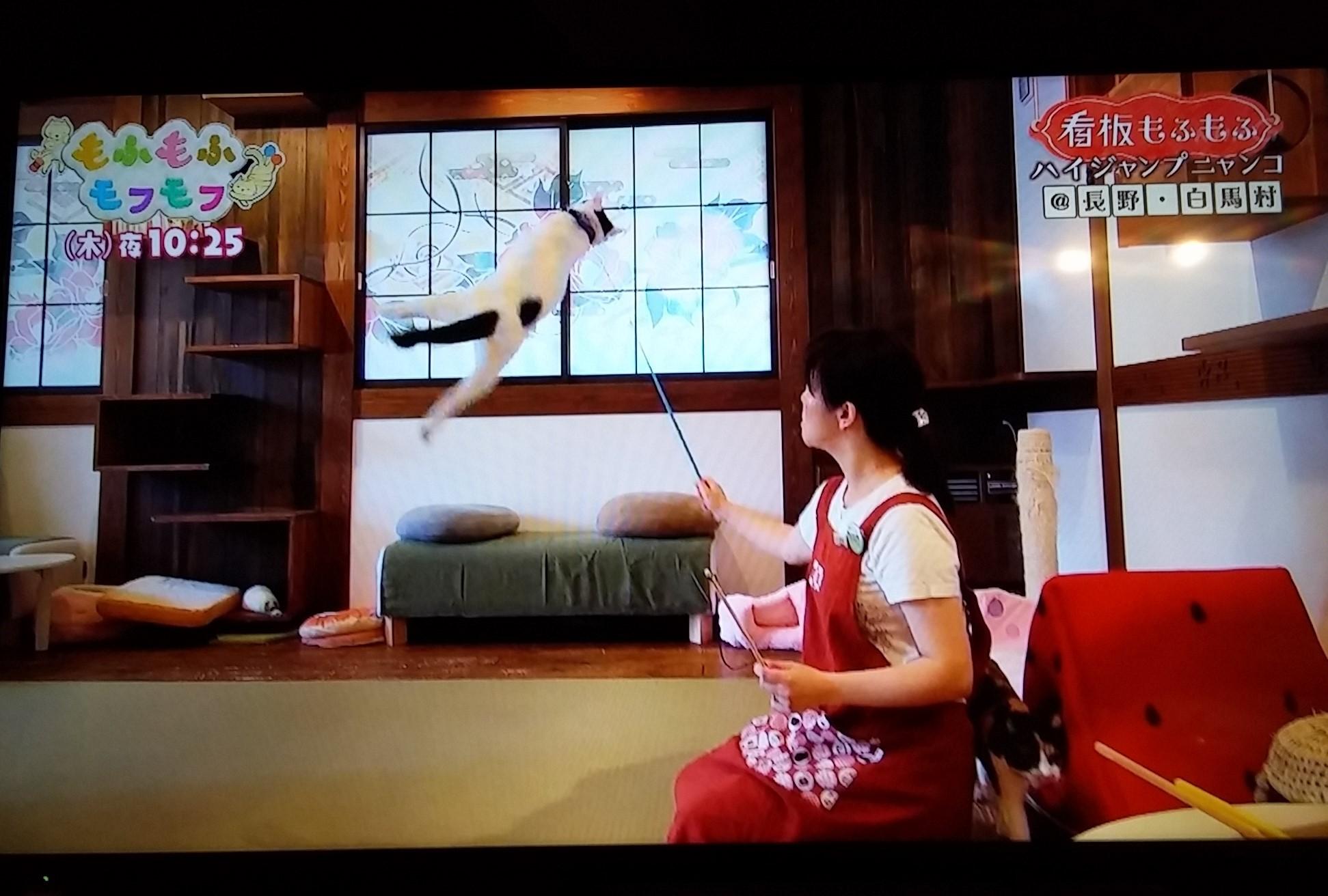 NHK総合 もふもふモフモフの看板もふもふコーナーで放送されました♪