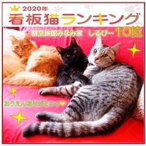 看板猫ランキング2020 しるびー(サバトラ3歳♂)