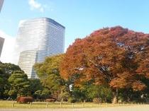 秋の浜離宮庭園 3