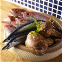 【カキツバタ】新鮮なお魚と日本酒が楽しめる!