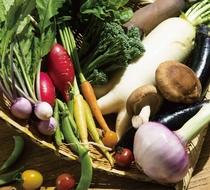 季節感あふれる地元の野菜を使用しております。