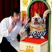 カドリードミニオン:テレビで大人気のみやざわ劇場。笑いあり楽しい動物ショーをお楽しみ頂けます。