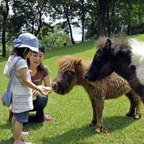 カドリードミニオン:世界のいろんな動物にエサやりしたりふれあったり子供だけでなく大人も楽しめます。