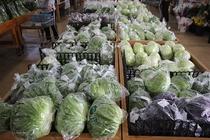ファーマーズマーケット与那原 あがりはま市場(車で5分)地域の農家さんが大切に育てた農作物を販売!