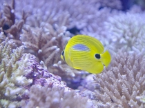 沖縄を代表する人気スポット「美ら海水族館」小さな魚たちも華やかに。