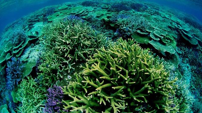 【ホテル⇔港までの送迎付き】ケラマ諸島で珊瑚礁を満喫☆滞在中1回シュノーケリング半日ツアー付☆朝食込