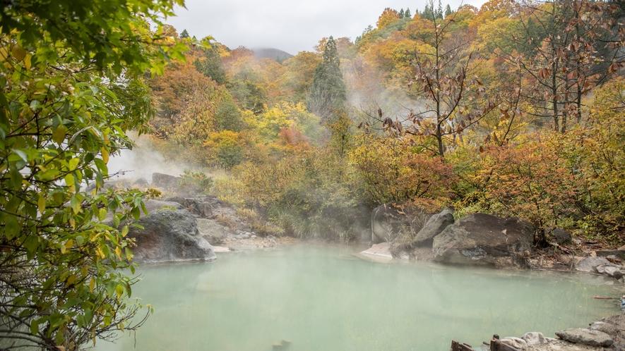【源泉】これぞまさに秘境の湯の醍醐味!当館の自家源泉は、山の奥地へ分け入った場所から引き込んでいます
