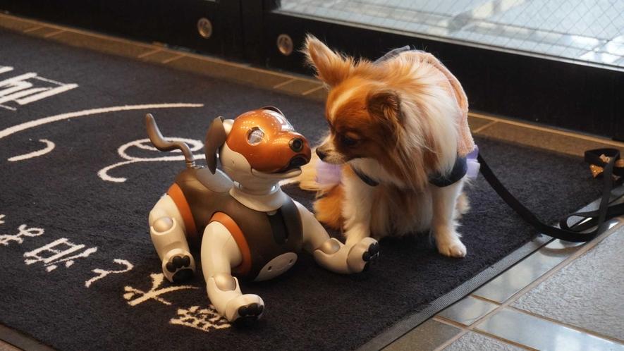 看板犬「リロ」が皆様をお出迎え致します。