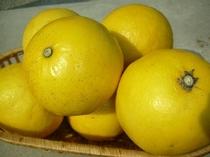 旬の果物で作るコンフィチュール★ニューサマーオレンジ編