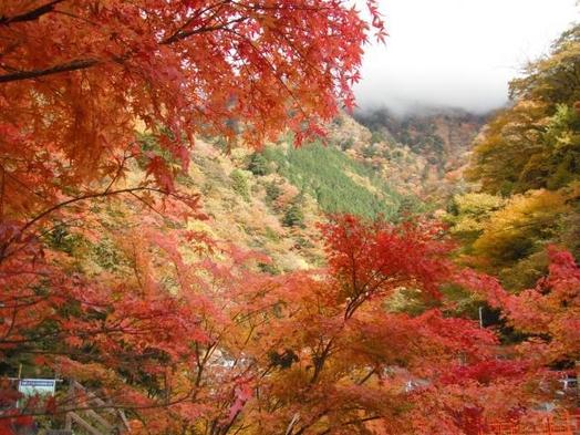 【紅葉まっさかり♪】ドリンクサービス付★秋の紅葉と濃い温泉を満喫★