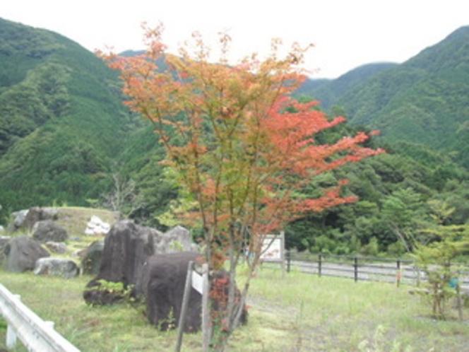 黄金の里の紅葉