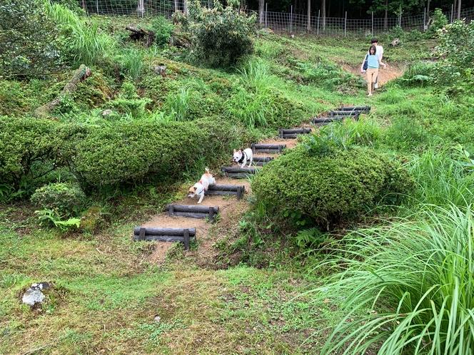 裏山に行く階段