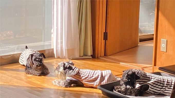 【オータムSALE直前割☆30%オフ】【ペットと泊まれる】アメリカンハウス風プレイルーム付貸別荘