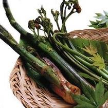 春は山菜★