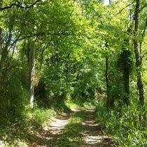 細い林道を抜けて坂を登ると絶景が待っています。