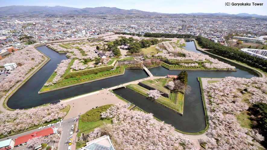 五稜郭タワーから見た五稜郭公園(春)桜の花が公園内に咲き乱れます