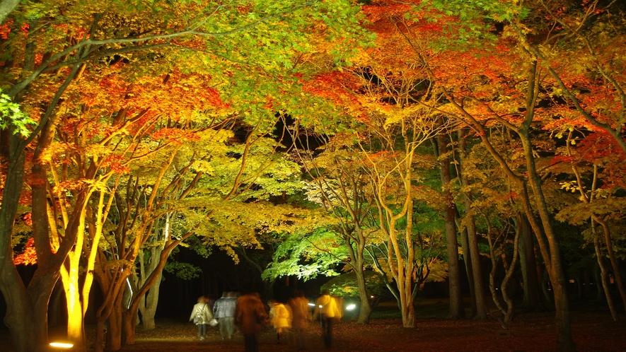見晴公園(香雪園)秋は紅葉のライトアップイベントが開催