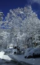 駐車場の白樺に積もる雪