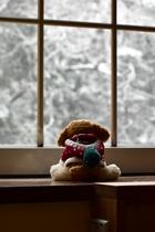 雪を眺める