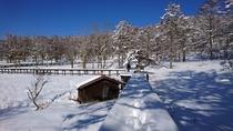 冬の女神湖の遊歩道