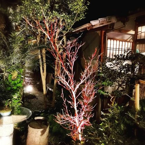 奥庭の庭木