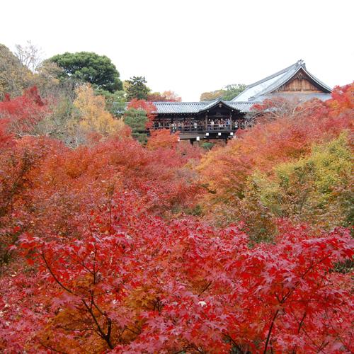 ◆京都観光◆東福寺の紅葉