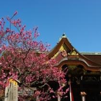 ◆京都観光◆北野天満宮の梅