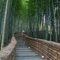 ◆京都観光◆嵯峨野の竹林