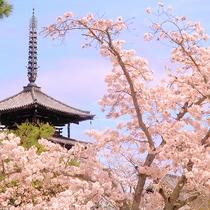 【法隆寺の桜(春)】