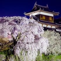 【大和郡山城のライトアップ(春)】
