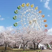 【八戸公園】観覧車と桜